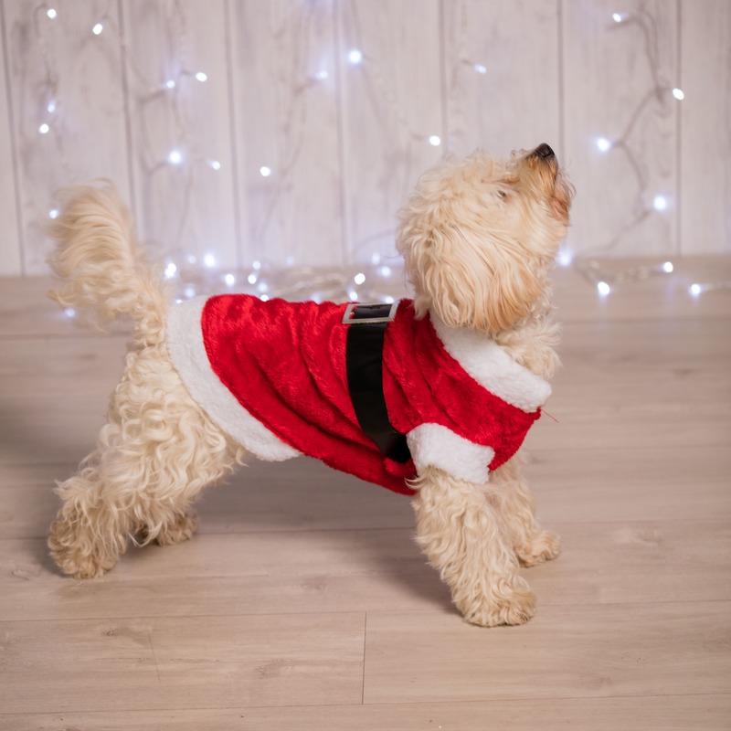 Kerstman kostuum voor de hond