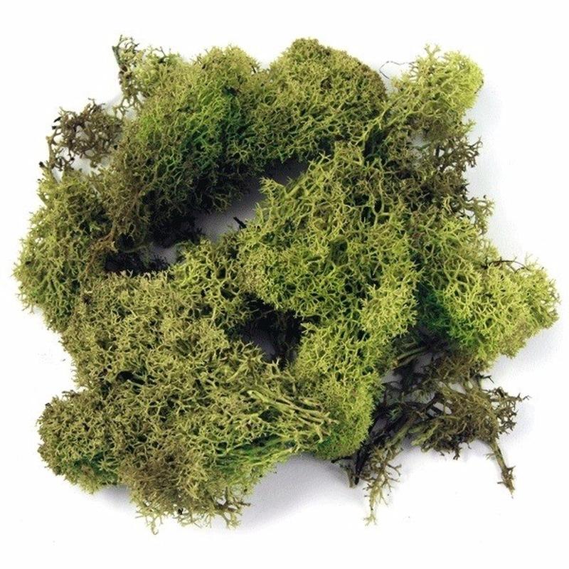 Decoratie mos lichtgroen 100 gram